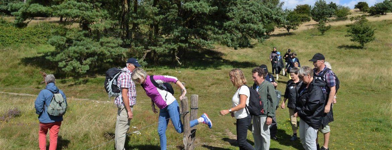 Et elektrisk hegn i Mols Bjerge er ingen hindring. Foto Helle Mortensen.