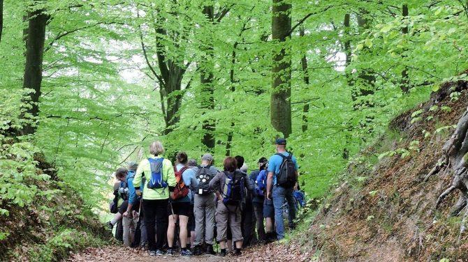 I den grønne skov. Foto Lis Mejlby Vandrernes Dag i Region Sjælland