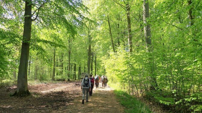 Nyudsprunget bøgeskov på Tåsinge. Foto Bente Michelsen