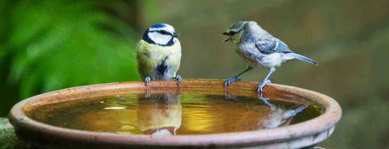 Forbedret kommunikation fra et fugleperspektiv