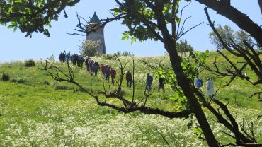 Vi kigger ofte op og ud, som her ved Todbjerg Tårnet, men hvilke spiselige planter passerer vi på vejen. Foto Preben Simonsen