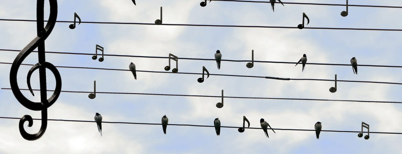 Fuglene har måske sunget med under de Maritime Vandringer.