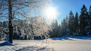 sne skov vinter grantræer foto Pixabay