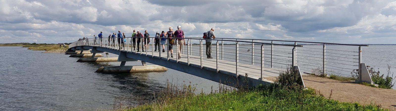 Bagges Dæmning ved Ringkøbing FJord Foto Conny Thomsen