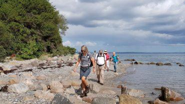 Vi kommer helt tæt på landskabet fx på kystvandring ved Århusbugten. Foto Marianne Bach