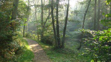 En dansk skovsti er som skabt til at gå ud på egen hånd. Foto Pixabay.