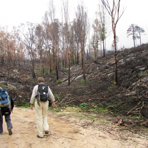 Branden i august havde hærget eukalyptustræerne. Men der kommer hurtigt grønt op, Algarve. Foto Bente Michelsen