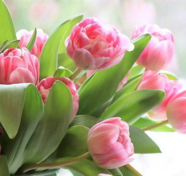 Tulipaner Foto Pixabay