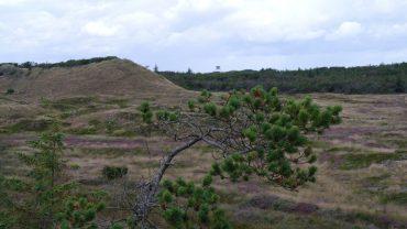 Lodbjerg Fyr i Thy Nationalpark er en af de mange muligheder på Vandrernens Dag.