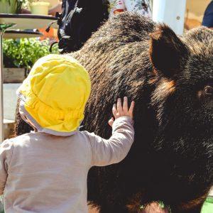 Barn aer udstoppet vildsvin. Foto Naturmødet