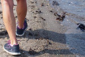 Vandre-sundheden gemmer sig bl.a. i strandkanten. Foto Gerda Kyed.