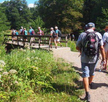 Gå dig sundere - fx med en vandretur i Handsted Skov. Foto Gerda Kyed