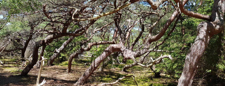 Troldeskoven tæt på. Foto Marianne Bach Nationalpark Kongernes Nordsjælland. Vandrestier i Region Hovedstaden