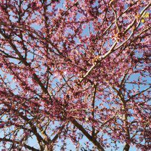 Foråret i fuldt flor. Foto Hans Henrik Kleinert.