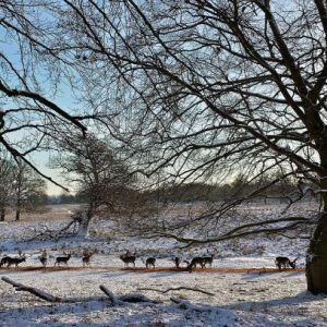 Vinter i Dyrehaven - vandreture i København og hovedstadsområdet