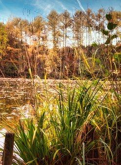 Skov, Sø, Efterår, Natur, Landskab