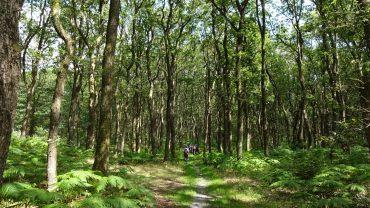 Vandrere i egeskoven. Foto Vagn Olsen