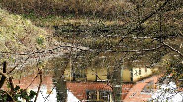 Tid til refleksion i Vallø Storskov. Foto Jens Arrent