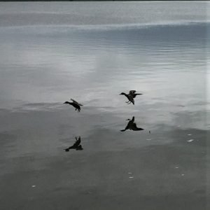 """Jeg besøgte for første gang """"Bjerget"""", og gik en tur/retur langs vandet. Jeg er ny i DVL: Dagen efter jeg meldte mig ind lukkede landet. Glæder mig til fremtidige ture! Foto Anne Jepsen"""
