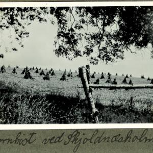Kornhøst ved Skjoldnæsholm i 1940. Foto Helge Prehn