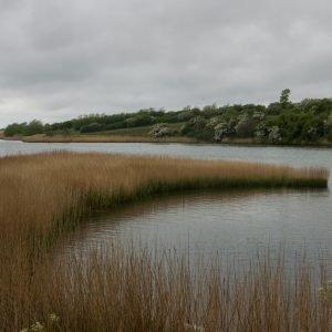 Vi vandrede rundt i det 18.000 år gamle istidslandskab på Nordals. Friluftsrådet har godkendt Sønderborg Kommunes ansøgning om at få området her optaget Pilotnaturpark Nordals i mærkningsordningen Danske Naturparker. Vi kommer steder, der gør os nysgerrige, som ikke findes i de mange officielle foldere. Foto Birte Steg