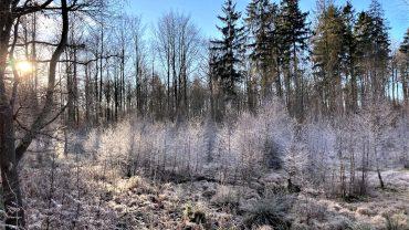 En vinterdag i Ravnsholt Skov. Foto Bente Michelsen