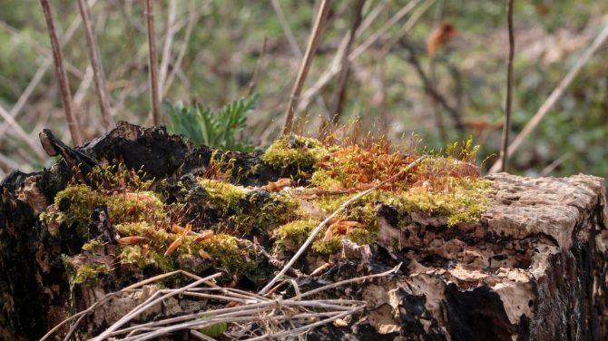 Mosbiotop - en af de småbiotoper, du kan møde på vandreturen. Foto Sten Porse