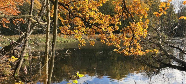 Ebberød Dam i Rude Skov. Foto Bente Michelsen