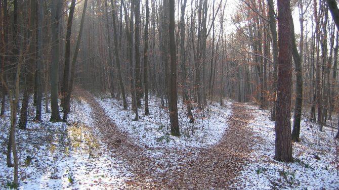 Der er spor af sne i øjeblikke. Det er værd at gå efter. Foto Pixabay
