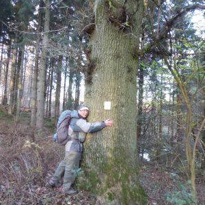 Anita Garbers krammer et træ