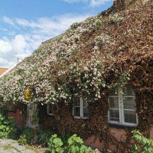Et hyggeligt hus langs Øhavsstien. Foto Hans Henrik Kleinert