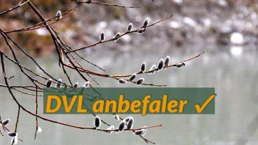 DVL anbefaler forårstegn. Foto Jens Arrent