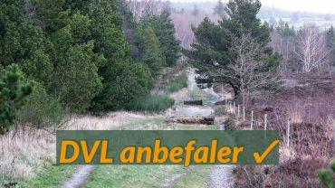 DVL anbefaler Marbæk Plantage. Foto Jens Andreas Pedersen