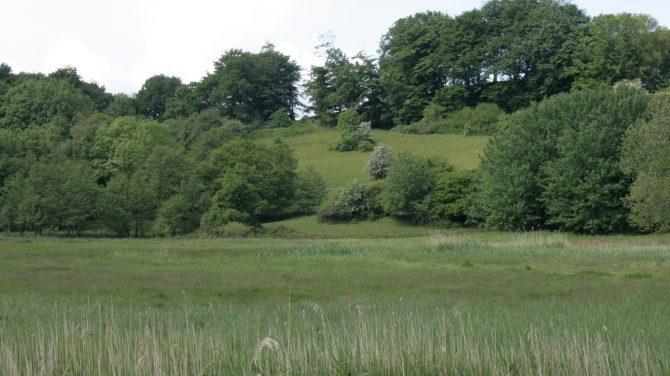 Her ses to landskabstyper: Forrest en høslæteng og bagerst et gammelt overdrev. Østvendt skråning ved Genner Strand, Sønderjylland. Foto Sten Porse
