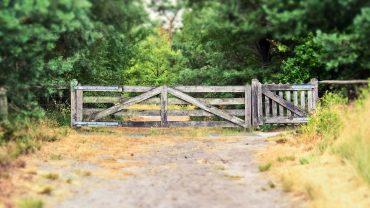Hegn i skov. Foto Michael Gaida - Pixabay