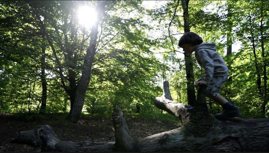 Ved picnic-området i Hareskoven er der gode klatretræer.