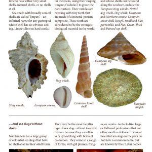 Bogen går også i detaljen om snegle i Illas Atlánticas de Galicia National Park.