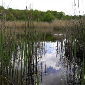 Idyllisk sø, hvor der lever masser af frøer. Foto Majbrit Søgaard.