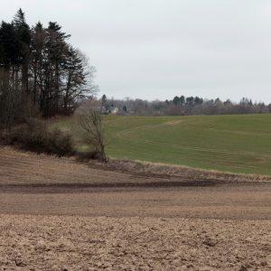 En lav græsklædt jordvold - rester af et tidligere dige. Foto Sten Porse