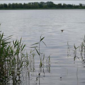 Indsøerne eller lagunerne med dens rørskove er levested for mange fugle og insekter.