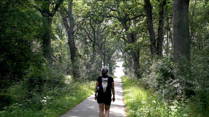 På ruten skal du igennem den skønneste ege-allé.