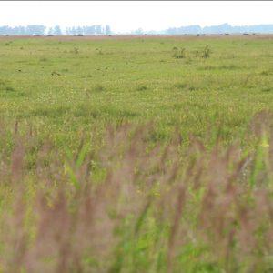 Naturpark Amager er stor, og man fornemmer det med kigget over overdrevene.