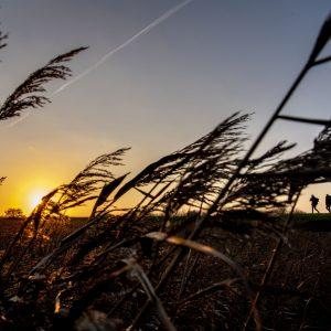 Marskstien i solnedgang. Foto Ulrik Pedersen Tøndermarsk Initiativet