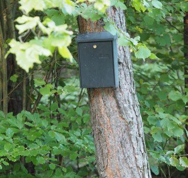 Postkasse i skoven. Foto Pixabay