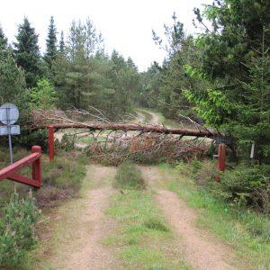 Træ spærrer Troldtoftevej i Ulfborg. Foto Preben Andersen