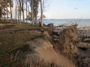 Væltede træer ved Hundshage. Foto Iris Francek.