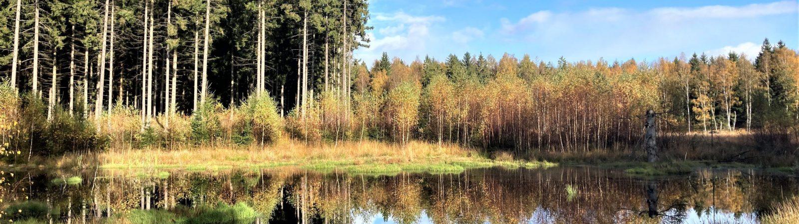 Stille vand i Gribskov. Foto Bente Michelsen