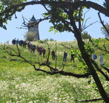 DVL-gruppe på toppen ved Todbjerg Tårnet. Foto Preben Simonsen.