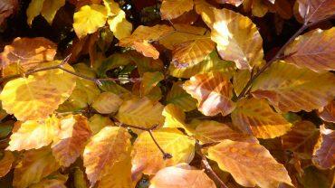 Efterårs blade
