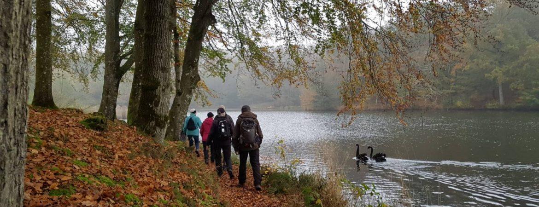 Vandrere og svaner følges ved Letbæk sø